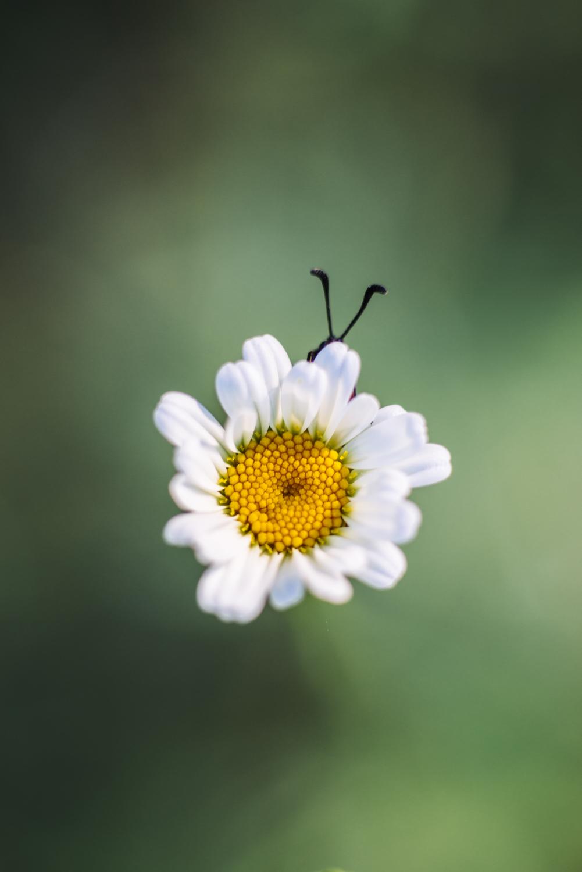Bug under flower