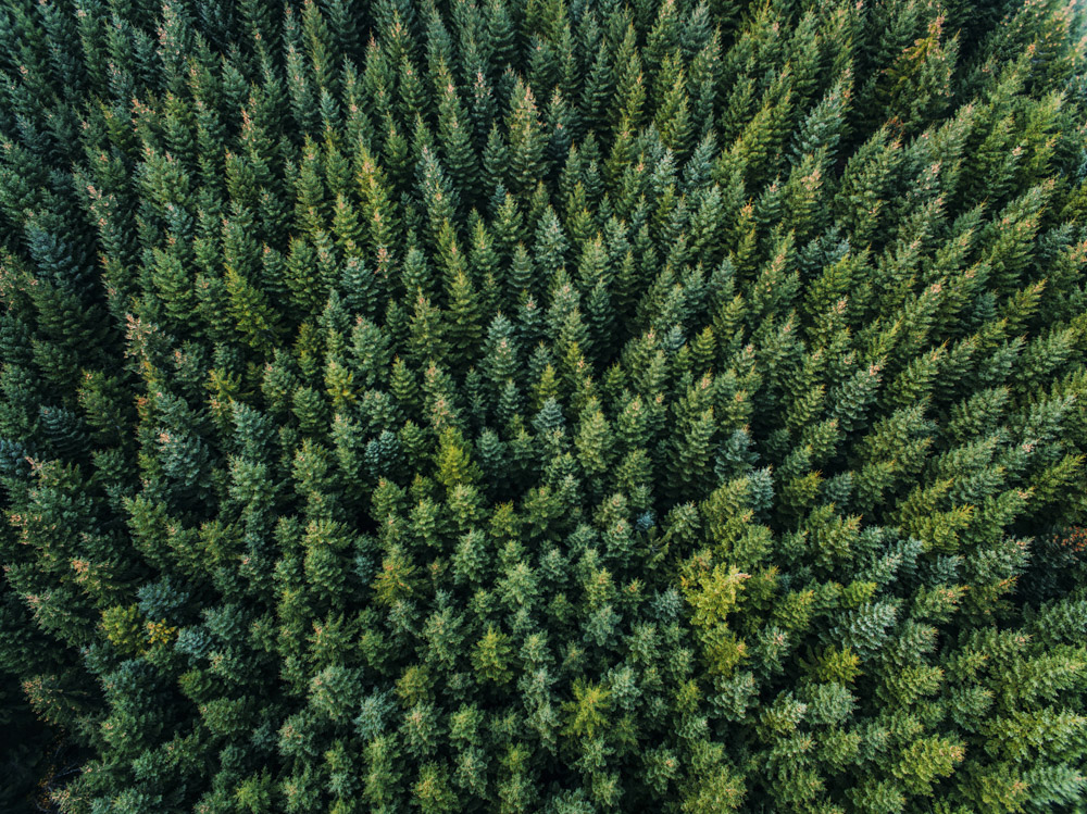 Aerial picture of a big forest