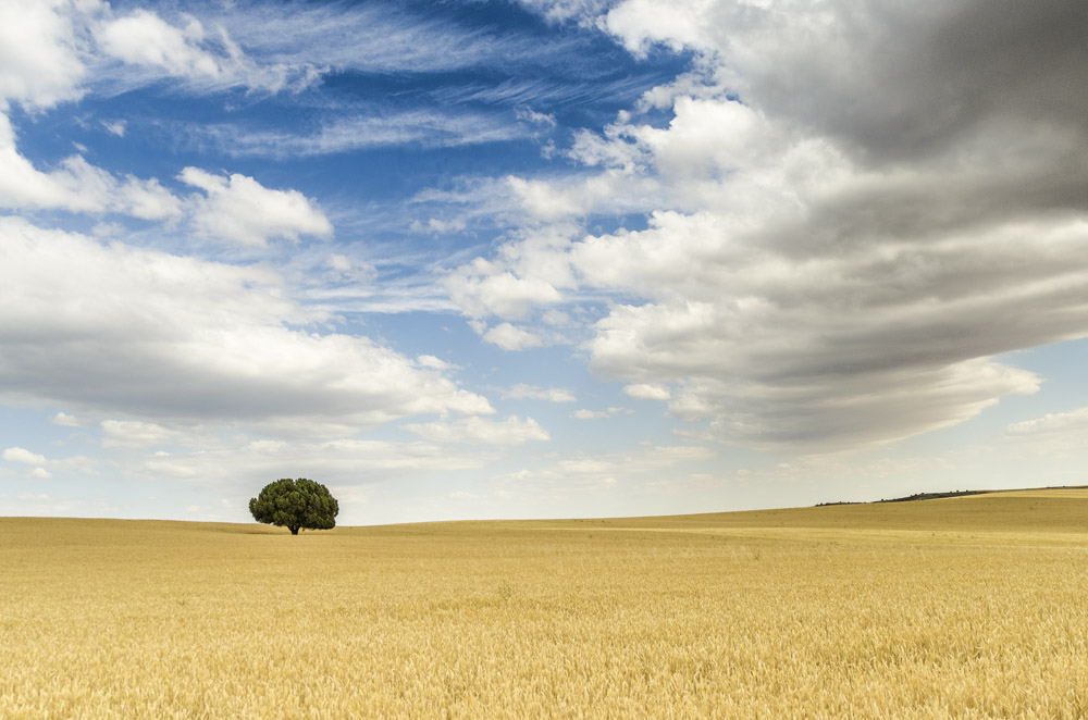 Solitude Tree on the fields